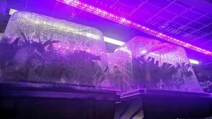 What is the led grow light?