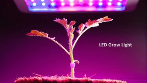 Can any LED light be used as a grow light