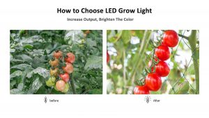 How to Choose LED Grow Light