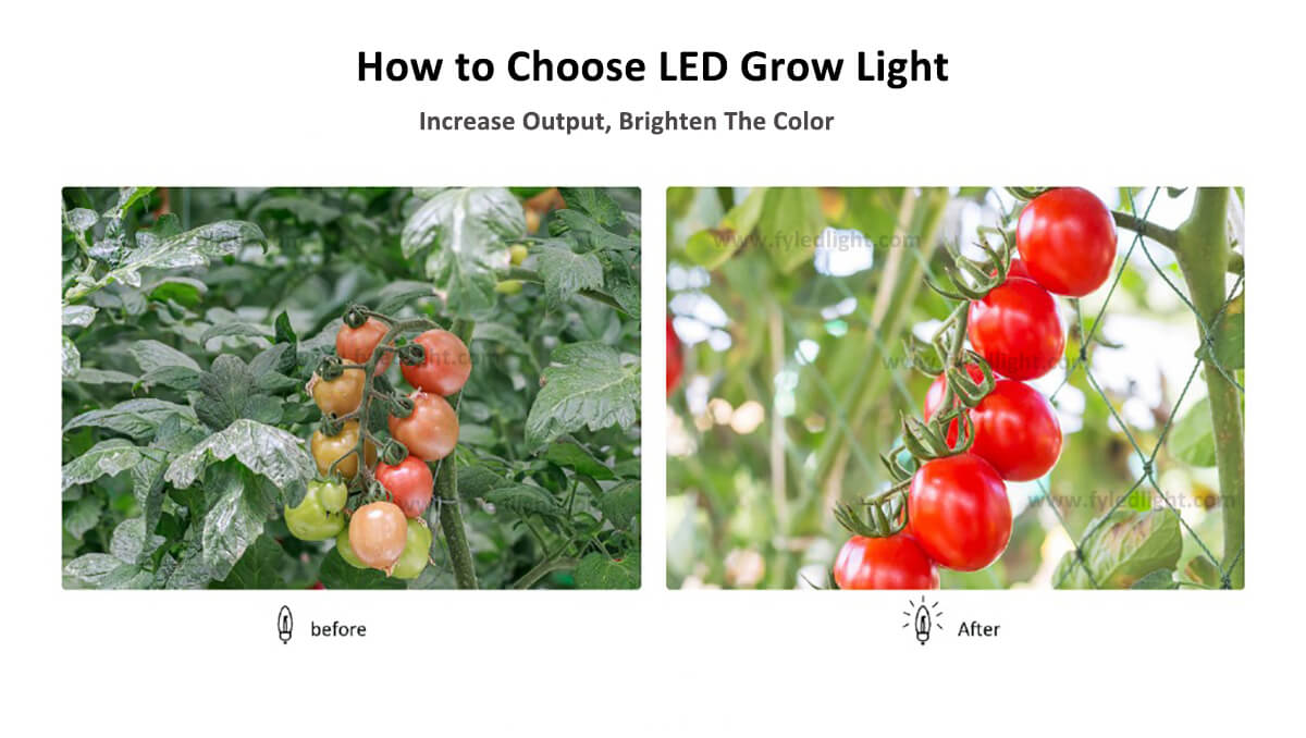 How to Choose LED Grow Light