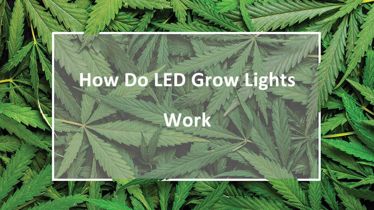 How Do LED Grow Lights Work